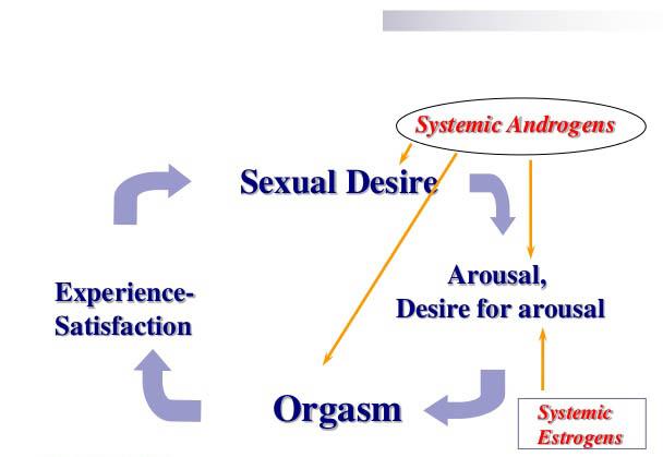 RenewFX Sexual Cyle Diagram